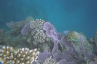 028 - Great Barrier Reef