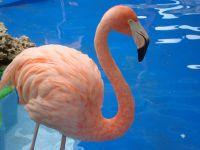 012_Flamingo