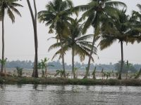 010 - Lake Vembanad